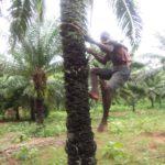 Montée au palmier